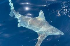 Boca-Grande-Offshore-Fishing-Charters-1