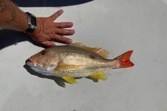 Boca-Grande-Offshore-Fishing-Charters-2