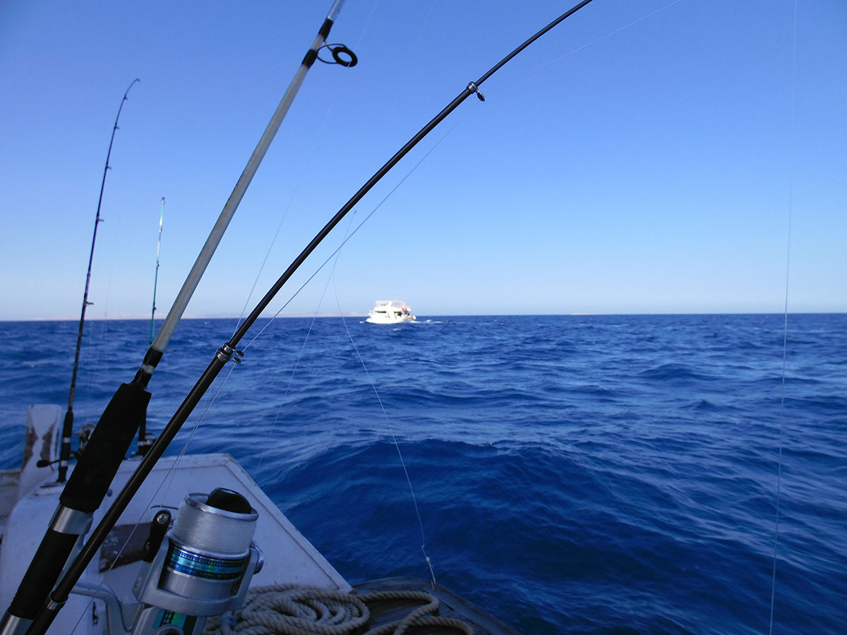 4 Reasons Why You Should Choose Capt. Jeff for Your Boca Grande Fishing Trip