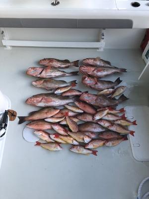 Boca Grande Fishing Charters Catch